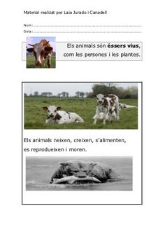 els-animals-cicle-inicial by via Slideshare Vertebrates And Invertebrates, Zoo Animals, Science And Nature, Places To Visit, History, Dogs, School Ideas, Culture, Natural