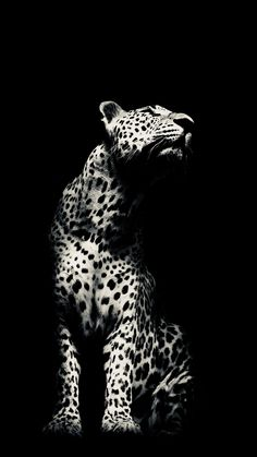 I really love this pic Wild Animals Photos, Animals And Pets, Cute Animals, Big Cats Art, Cat Art, Beautiful Creatures, Animals Beautiful, Wild Animal Wallpaper, Mode Poster
