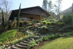 Um lindo Jardim de Lavanda na Serra Gaúcha