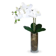 Resultado de imagem para vaso de vidro com orquidea