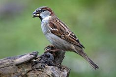 Vroege Vogels: Tipvideo: Veel vogels door slim voeren
