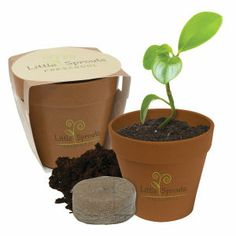 Simply plant, water and enjoy your flower. It goes with your small office or your big home!