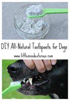 Deze DIY Natural Dog Tandpasta is allemaal natuurlijk en effectief.  Het is veilig en vrij van synthetische chemische stoffen, kleuren en additieven die commerciële degenen hebben.