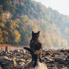 Pretty Cats, Beautiful Cats, Warrior Cats Books, Cat Anatomy, Adventure Cat, Cat Reference, Cat Pose, Feral Cats, Cat Photography