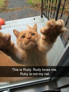 This is Ruby. Ruby loves me. Ruby is not my cat.