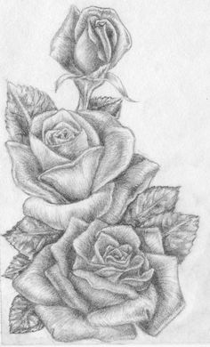 native american pencil and ink drawings | roses by m everham traditional art drawings still life 2005 2013 m ...