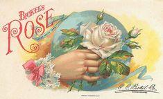 Bickel's Rose... trademark 1883.  Beautiful graphic!