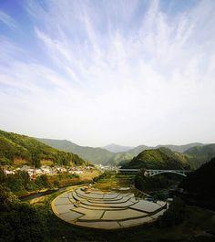 rice paddy in Wakayama, Japan