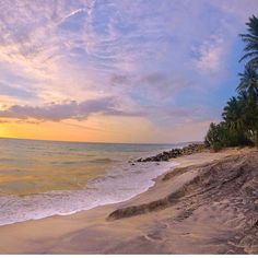 Stamp #593 - Sri Lanka : Turtle  sanctuary on a #beach in #SriLanka!  This is the beach at the back of the turtle sanctuary in hikkaduwa Sri Lanka. If you go at 6pm the owners may let you release some baby turtles into the sea on this beach at sunset!  Thank you @halfaworldawayblog for leaving your #ShareYourStamp!!  For more awesome #travel and #wanderlust tips and #adventure download the Stamp Travel #App Today. The link is in our bio!