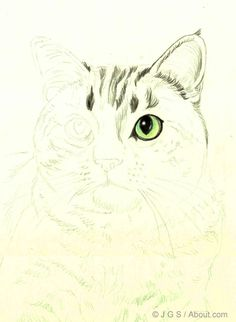 Color Pencil Drawing Tutorial How to Draw a Cat in Colored Pencil: Continuing the Eye Area - Cats are beautiful animals and they're fun to draw. Learn how to draw a beautiful realistic cat in colored pencil with this step by step lesson. Love Drawings, Animal Drawings, Pencil Drawings, Art Drawings, Pencil Art, Cat Drawing Tutorial, Pencil Drawing Tutorials, Realistic Cat Drawing, Kitty Drawing