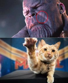 Avengers Endgame spoilers: new leaked footage shows who defeated Thanos. Join our group: Happy Cats Avengers Humor, Marvel Jokes, Funny Marvel Memes, The Avengers, Funny Memes, Avengers Hoodie, Marvel Avengers Assemble, Funny Videos, Marvel Dc Comics