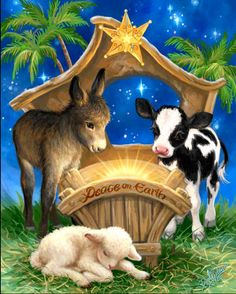 Born in a Manger