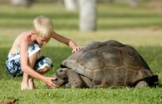 seychelles_country_gallery_giant_tortoise
