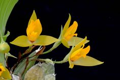 Selection of orchid photographs from Orchids through Darwin's Eyes. Photos by James Osen, Smithsonian Institution