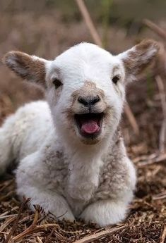 Love all Creatures both Great and Small. Do No Harm. Try Going Vegan Please.