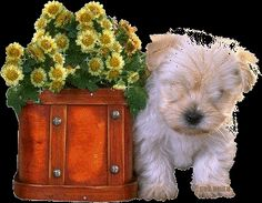 gifs - Page 7 Gifs, Gift Animation, Cute Puppies, Cute Dogs, Puppy Images, Glitter Graphics, Just Friends, Animated Gif, Funny Dogs