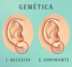 What Your Ears Reveal About You - Sweet Macaw Health Facts, Health And Nutrition, Health And Wellness, Health Tips, Health Fitness, Health Benefits, Herbal Remedies, Health Remedies, Natural Remedies