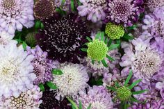 Lilac, purple and burgundy cottage scabious at New Covent Garden Market - August 2015 Lilac, Purple, Pink, New Covent Garden Market, Apple Orchard, Flower Market, Autumnal, Garden Design, Burgundy