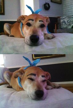 >>> this is my dog moogie and i drew eyebrows on him with eyeliner. enjoy. i can't stop laughing |  Imgur