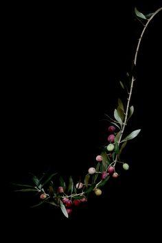 olives   STILL (mary jo hoffman)