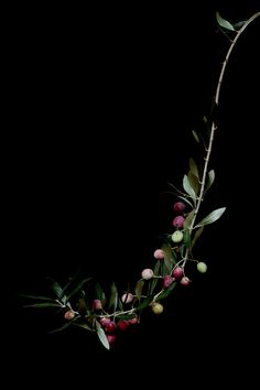 olives | STILL  (mary jo hoffman)