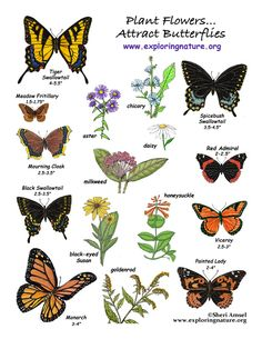 Learn about gardens and butterflies on Exploringnature.org