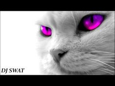 Brutal Minimal & Tech-House Mix 2017. (Toxic Cat) Dj Swat - YouTube