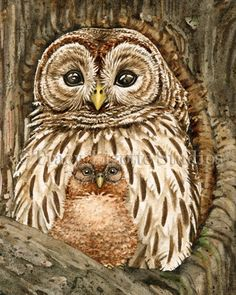 Owl Tree with Barred Owls archival by TracyLizotteStudios on Etsy