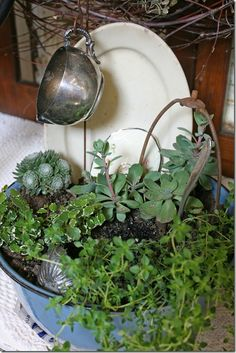 This one with the oval platter and silver creamer…and notice the vintage tart tin and the lamp harp…genius!! Plants are succulents...that I love!