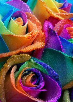 Split the stem of a white rose into multiple pieces and put them into separate cups of dye! Split the stem of a white rose into multiple pieces and put them into separate cups of dye! Beautiful Rose Flowers, Beautiful Flowers Wallpapers, Rainbow Roses, Rainbow Colors, Carpe Diem, Free Adult Coloring, Creative Eye Makeup, Flower Phone Wallpaper, Bright Pictures