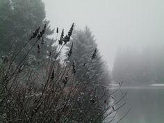Bradley Lake Park  Puyallup, WA
