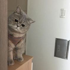 Because I always liked cats - cutest-animals-here: More cute animals here! Kittens Cutest, Cats And Kittens, Cute Cats, Funny Cats, Fluffy Animals, Cute Baby Animals, Animals And Pets, Pretty Cats, Beautiful Cats