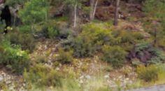 Lake Tahoe Bigfoot Sighting Zoomed in and slowed down