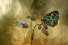 International Nature Photography Competition
