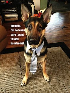 Beauty is in the eye of the beholder--even when it comes to dogs! | Handsome funny German Shepherd puppy