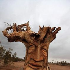 carved tree root