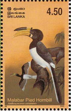 Malabar Pied Hornbill stamps - mainly images - gallery format