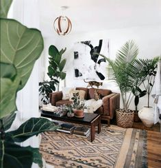 Urban jungle - plants