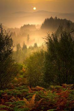 Woodland wanderer - evergreens... fog... big, golden sun... perfect