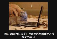 【腹筋ねじ切れた】笑って癒される猫の大喜利14選   CuRAZY [クレイジー]
