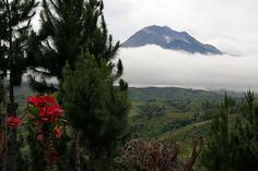 Mount Apo: Highest Mountain in Philippines :http://touristspotsfinder.com/2014/12/mount-apo-highest-mountain-in-philippines/