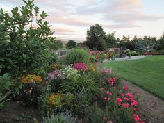 Pink Supreme Flower Carpet roses add long-lasting color to this New England cottage garden