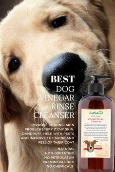 7 Best Pet Stain Solution Images Cleanser Animaux Carpet
