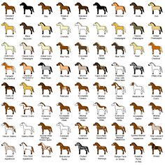Q; What is the exact number of horse breeds int he world? A: There are exactly 267 breeds of horses and ponies in the world. -Wikianswers.com