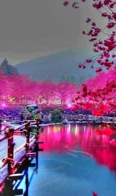Lighted cherry blossom lake in sakura, japan places to see, places to travel, Places Around The World, The Places Youll Go, Places To See, Around The Worlds, Dream Vacations, Vacation Spots, Vacation Travel, Beautiful World, Beautiful Places