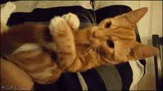 猫gif 爆笑 面白い まとめ