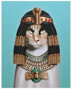 Empire Art Direct Pets Rock Cleopatra Graphic Art on Wrapped Canvas Cat Wall Art, Size: x x Blue Cat Wall, Wall Décor, Cleopatra, Canvas Wall Art, Canvas Prints, Canvas Canvas, Cotton Canvas, Cat Lovers, Wrapped Canvas