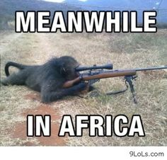 Rise of the Planet of the Apes, this is the part where they found out how to use guns.