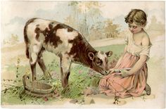 Free Vintage Calf Image for our milk paint display. : )