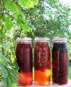 Metsästysblogi, riistareseptit - Terveiset ravintoketjun huipulta: Kotitekoisen liköörin valmistus